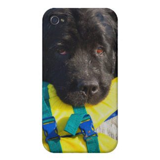 USA, California. Newfoundland With Life Vest iPhone 4 Covers