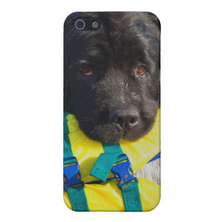 USA, California. Newfoundland With Life Vest iPhone 5 Cases