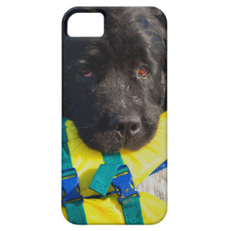USA, California. Newfoundland With Life Vest iPhone 5 Cover