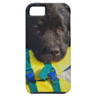 USA, California. Newfoundland With Life Vest iPhone 5 Covers