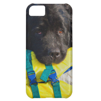 USA, California. Newfoundland With Life Vest iPhone 5C Case