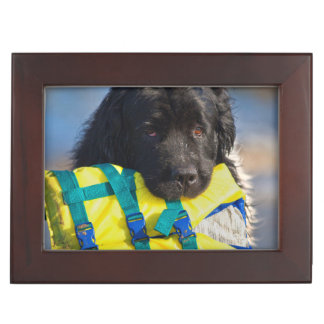 USA, California. Newfoundland With Life Vest Keepsake Box