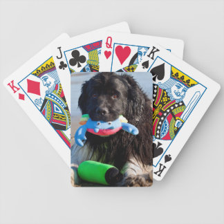 USA, California. Newfoundland With Toy In Mouth Bicycle Playing Cards