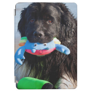 USA, California. Newfoundland With Toy In Mouth iPad Air Cover