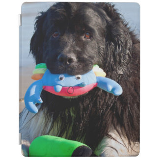 USA, California. Newfoundland With Toy In Mouth iPad Cover