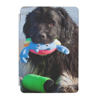 USA, California. Newfoundland With Toy In Mouth iPad Mini Cover