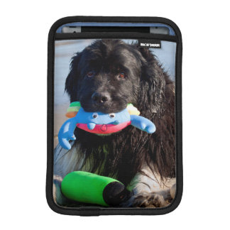 USA, California. Newfoundland With Toy In Mouth iPad Mini Sleeve