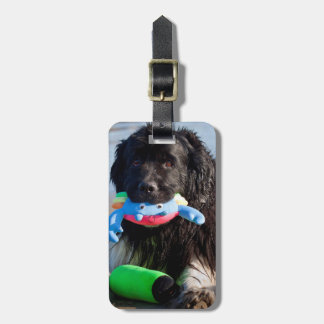 USA, California. Newfoundland With Toy In Mouth Luggage Tag