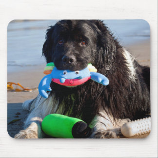 USA, California. Newfoundland With Toy In Mouth Mouse Mat