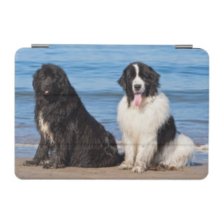 USA, California. Newfoundlands Sitting iPad Mini Cover