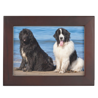 USA, California. Newfoundlands Sitting Keepsake Box