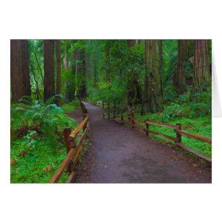 USA, California. Path Among Redwoods Card
