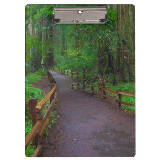USA, California. Path Among Redwoods Clipboard