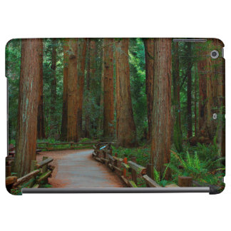 USA, California. Path Among Redwoods In Muir