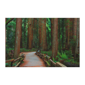 USA, California. Path Among Redwoods In Muir Canvas Print