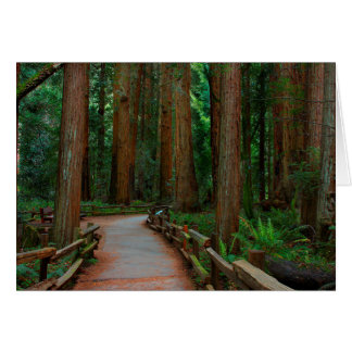 USA, California. Path Among Redwoods In Muir Card