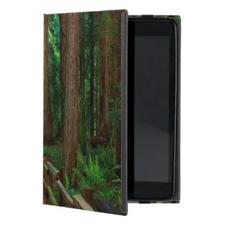USA, California. Path Among Redwoods In Muir Case For iPad Mini