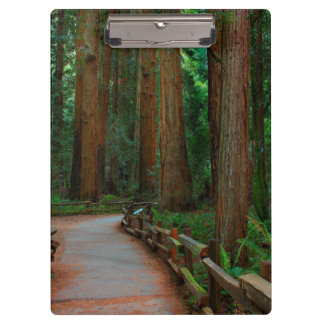 USA, California. Path Among Redwoods In Muir Clipboard