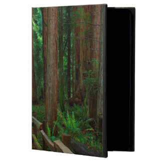 USA, California. Path Among Redwoods In Muir iPad Air Case