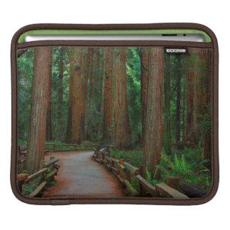 USA, California. Path Among Redwoods In Muir iPad Sleeve