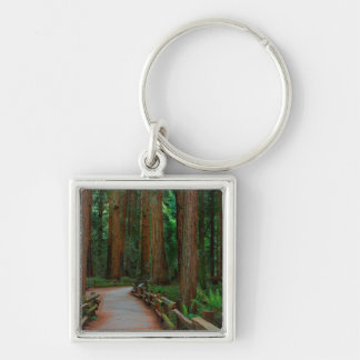 USA, California. Path Among Redwoods In Muir Silver-Colored Square Key Ring