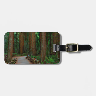 USA, California. Path Among Redwoods In Muir Luggage Tag