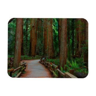 USA, California. Path Among Redwoods In Muir Magnet