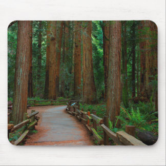 USA, California. Path Among Redwoods In Muir Mouse Mat