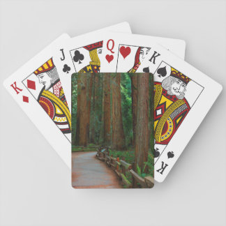 USA, California. Path Among Redwoods In Muir Poker Deck