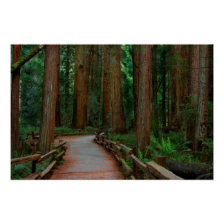 USA, California. Path Among Redwoods In Muir Poster