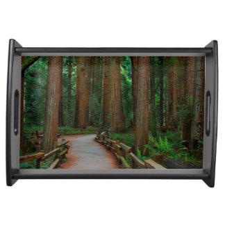 USA, California. Path Among Redwoods In Muir Serving Tray