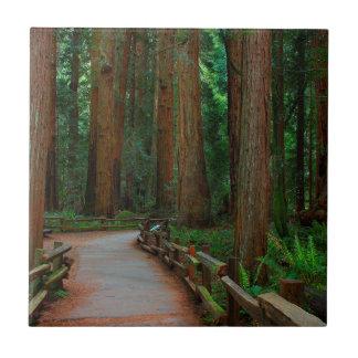 USA, California. Path Among Redwoods In Muir Tile