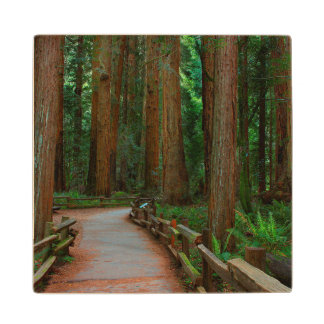 USA, California. Path Among Redwoods In Muir Wood Coaster