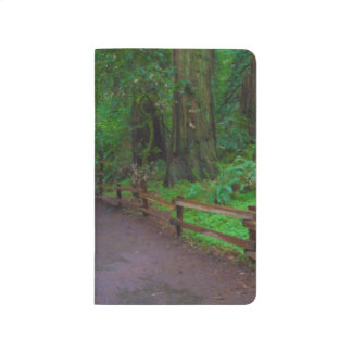 USA, California. Path Among Redwoods Journals