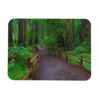 USA, California. Path Among Redwoods Magnet