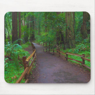 USA, California. Path Among Redwoods Mouse Mat