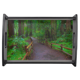 USA, California. Path Among Redwoods Serving Tray