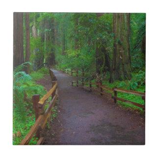 USA, California. Path Among Redwoods Tile