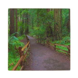USA, California. Path Among Redwoods Wood Coaster