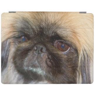 USA, California. Pekingese Close Up iPad Cover
