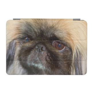 USA, California. Pekingese Close Up iPad Mini Cover