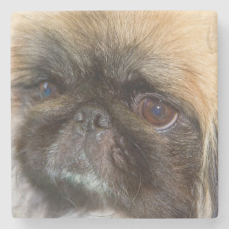 USA, California. Pekingese Close Up Stone Coaster