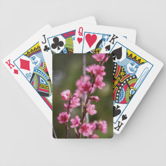 USA, California. Pink Blooms On A Tree Bicycle Playing Cards