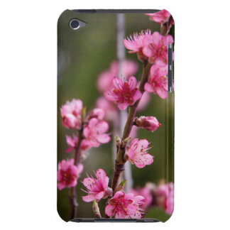 USA, California. Pink Blooms On A Tree Barely There iPod Cover