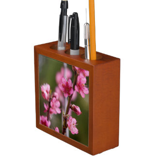 USA, California. Pink Blooms On A Tree Desk Organiser