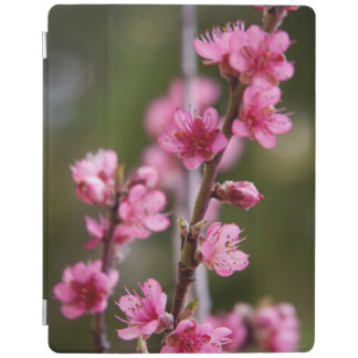 USA, California. Pink Blooms On A Tree iPad Cover