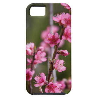 USA, California. Pink Blooms On A Tree iPhone 5 Cover