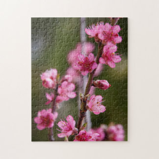 USA, California. Pink Blooms On A Tree Jigsaw Puzzle