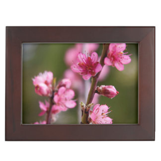 USA, California. Pink Blooms On A Tree Keepsake Boxes