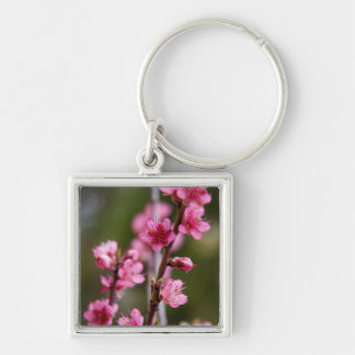 USA, California. Pink Blooms On A Tree Key Ring